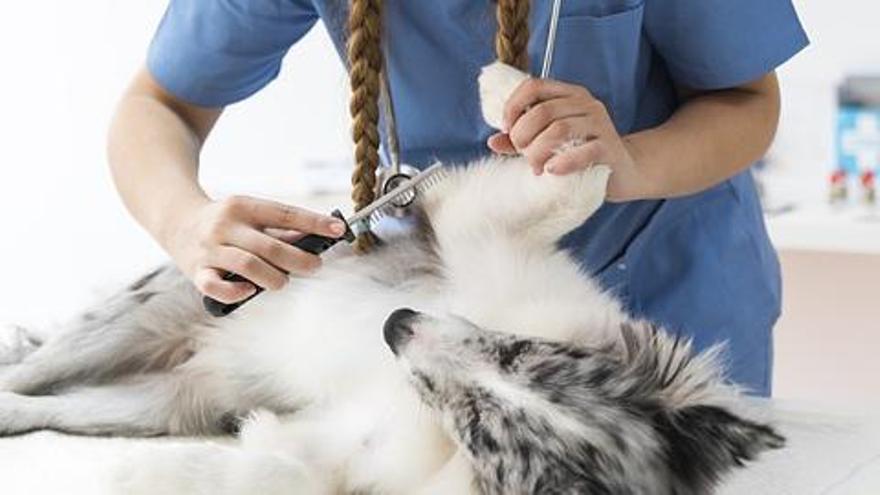 Los seguros sanitarios para animales siguen abriéndose mercado