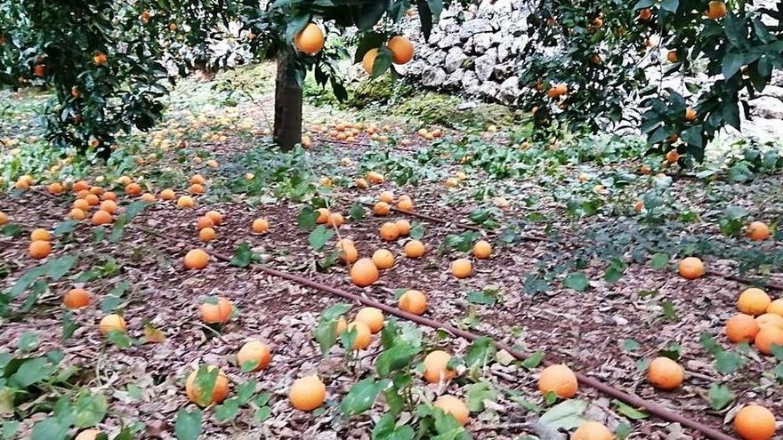 Fehlende Nachfrage bereitet Orangen-Bauern Sorge