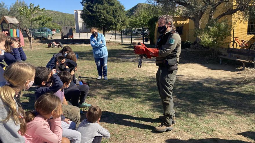 Les escoles de Cistella, de Boadella i Les Escaules alliberen dos astors del Centre de Fauna dels Aiguamolls