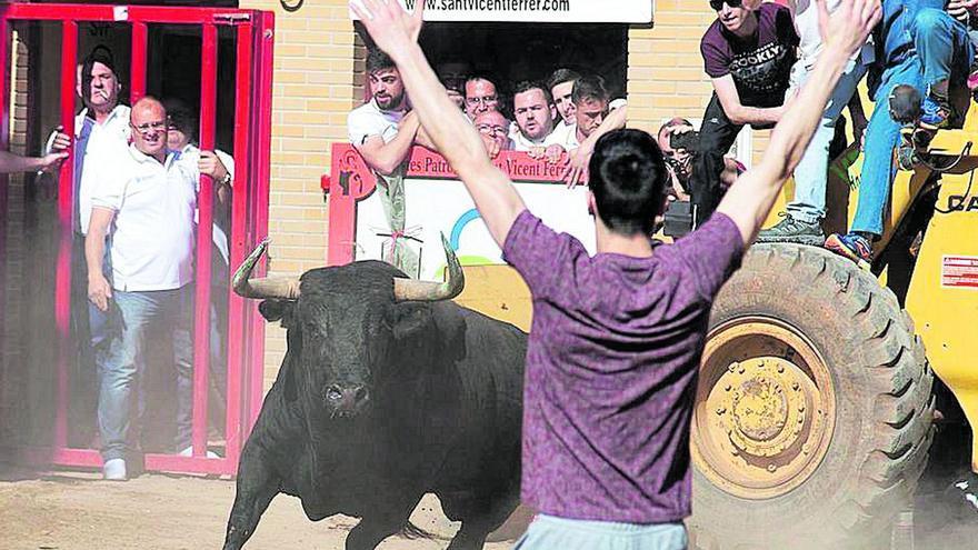 El regreso del 'bou al carrer' a Castellón: estas son las nuevas exigencias
