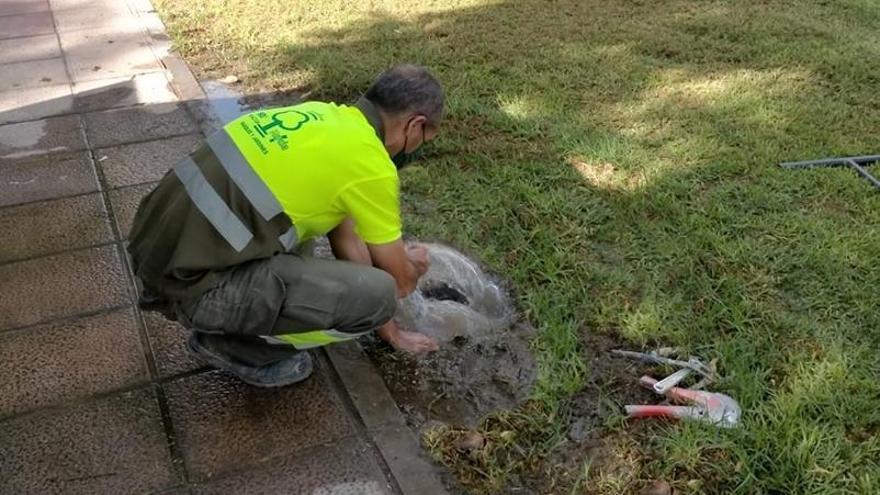 El Ayuntamiento de Murcia crea un servicio 24/365 para resolver urgencias en parques y jardines
