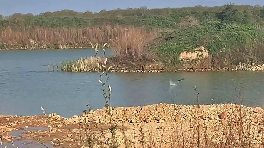 Piden conservar el ecosistema surgido de una gravera de Camarzana de Tera