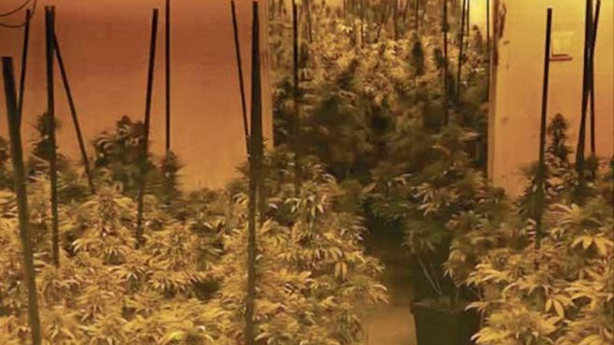 El rey de la marihuana, imputado por blanqueo y  organización criminal