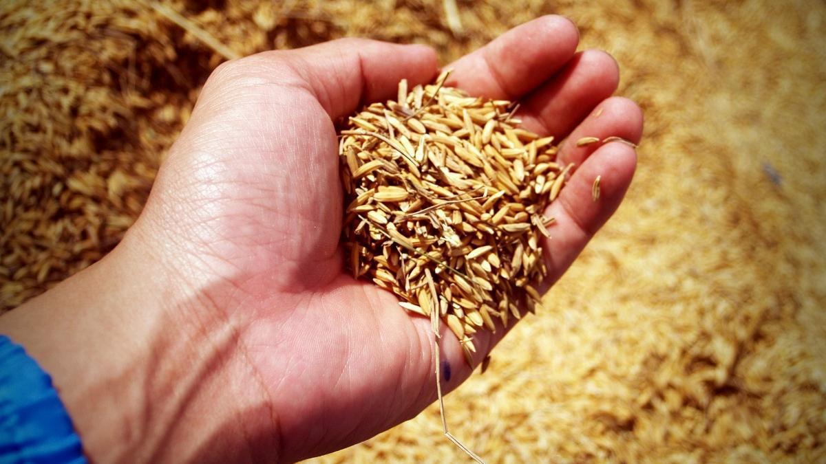 El arroz valenciano para bebés y celíacos que recomiendan los expertos