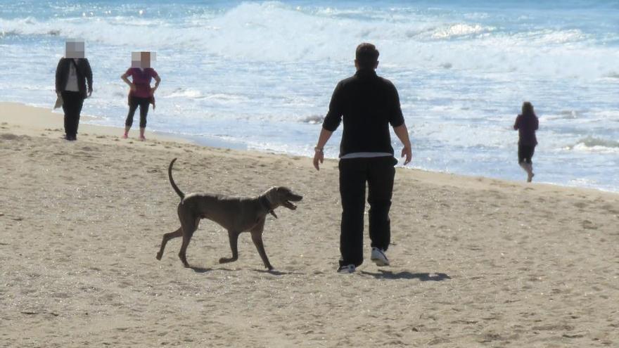 Perros ilegales en A Lanzada