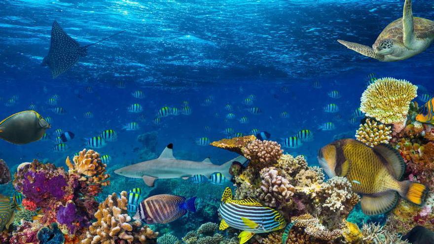 Cómo clasificar de forma sencilla a las especies del mar