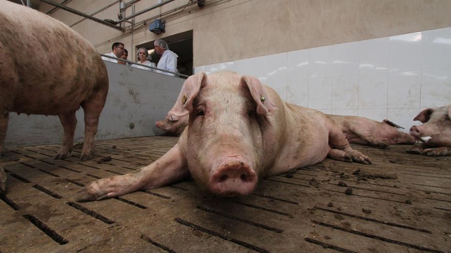 El consejo del ministro Garzón de comer menos carne indigna al sector en Zamora
