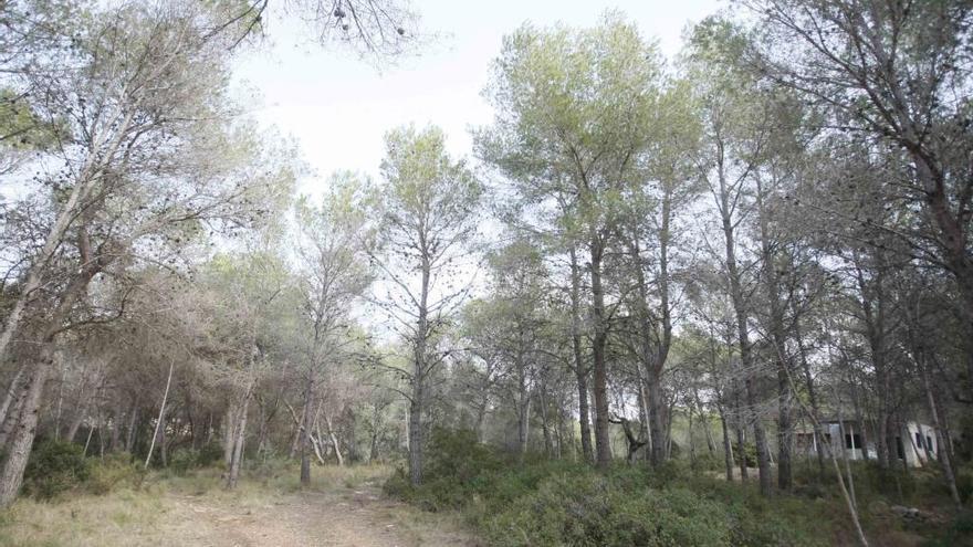Casi 276 hectáreas protegidas en Romeu de bosque mediterráneo