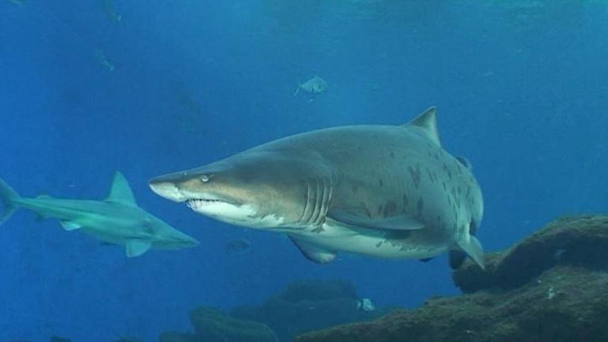 Mallorca will Babyhaie und Rochen im Meer auswildern