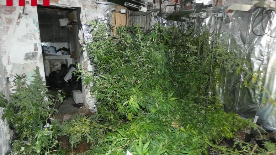 Quatre detinguts per un robatori violent a Vilafant i equivocar-se de domicili a l'hora d'assaltar-lo