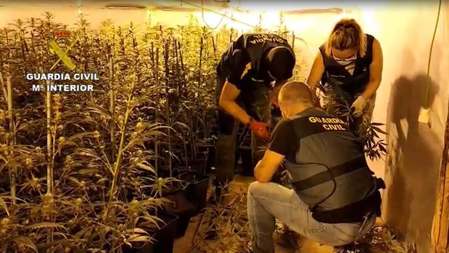VÍDEO | Así fue la operación de la Guardia Civil para desmantelar dos plantaciones de marihuana en Tierra de Campos