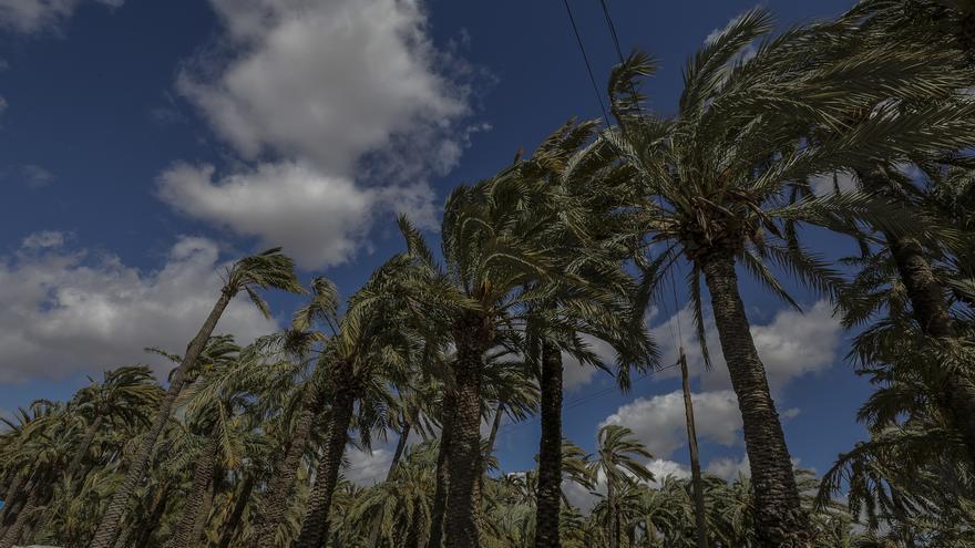 Suspendido el Cor de Cambra d'Elx en el Parque Municipal por la preemergencia de viento