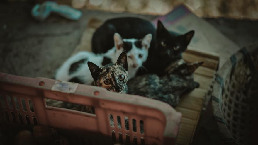 Las 24 prohibiciones de la nueva Ley de Protección Animal