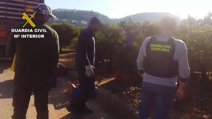 Golpe a los robos y fraudes agrícolas en la Marina Alta y la Safor
