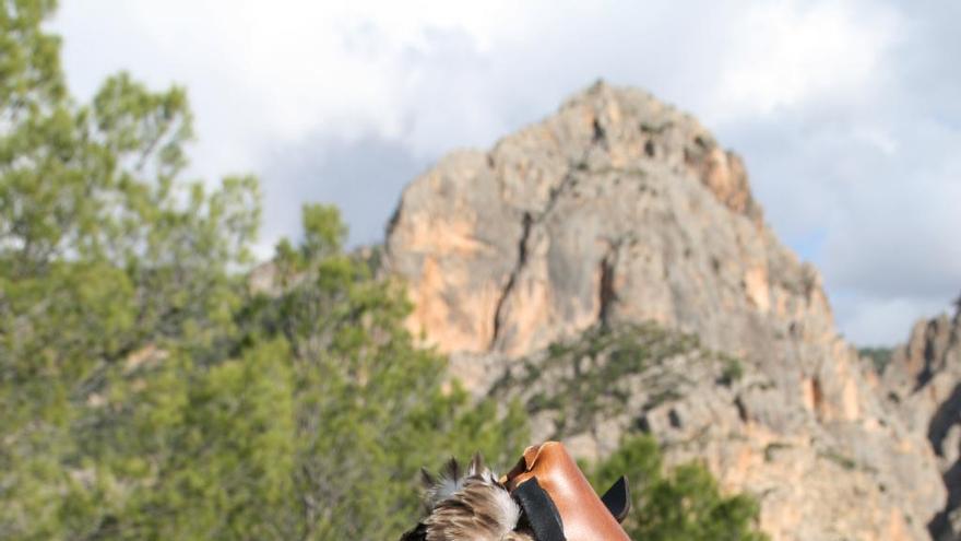 Marcan con emisores vía satélite a tres águilas perdiceras en las Hoces del Cabriel
