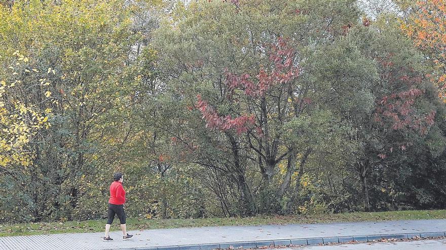 Los árboles de calles y parques necesitan un plan urgente de conservación, dice el PP