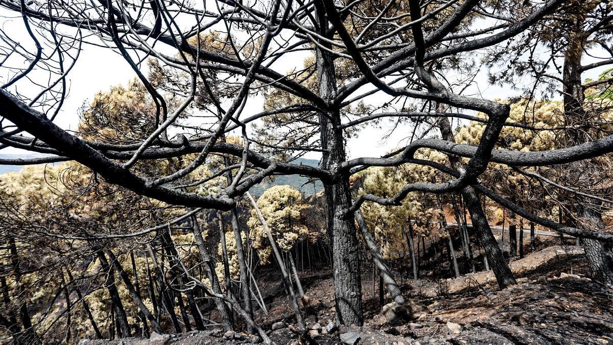 Zonas quemadas por el incendio de Sierra Bermeja, en el área de Puerto de Peñas Blancas a 14 de septiembre 2021 en Estepona (Málaga) Andalucía