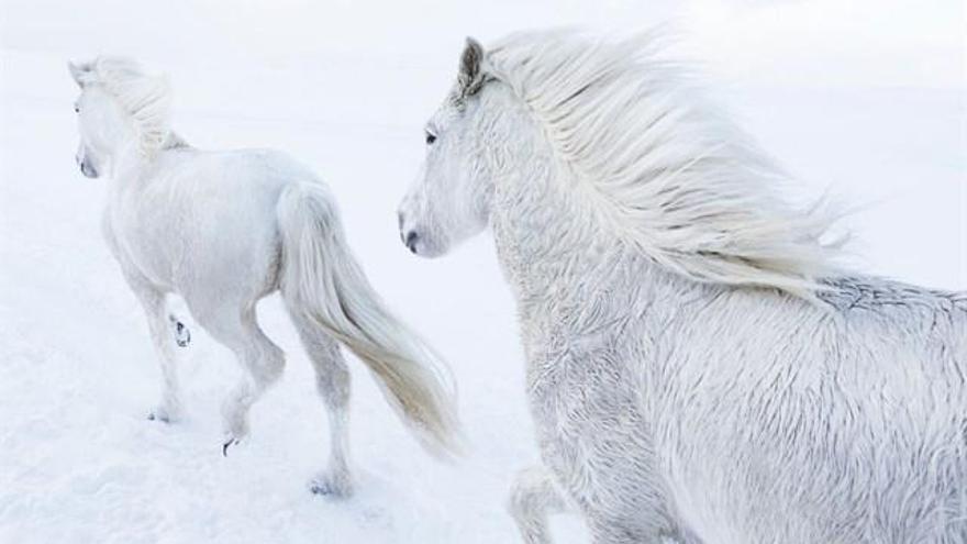 «In the Realm of Legends», la sèrie fotogràfica que mostra els cavalls islandesos