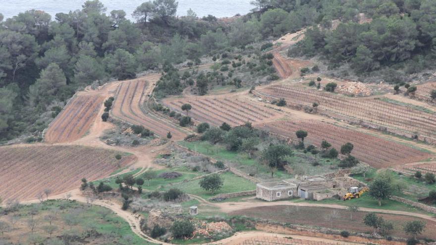Las cooperativas agrícolas piden medidas ante el aumento de robos en el campo en Ibiza