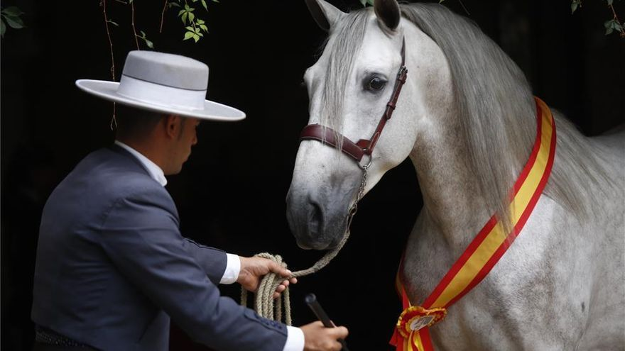 El Ayuntamiento plantea una alianza con Jerez y el Sicab de Sevilla para potenciar el turismo ecuestre