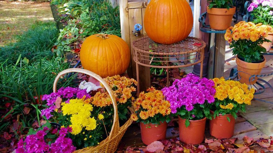 Las tres plantas que debes colocar en tu casa para Halloween