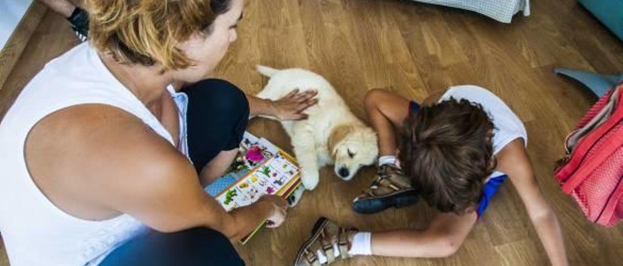 Coco, el perro Marc, tan sólo tiene dos meses pero, en cuestión de un año, aprenderá a detectar las crisis epilépticas del niño.