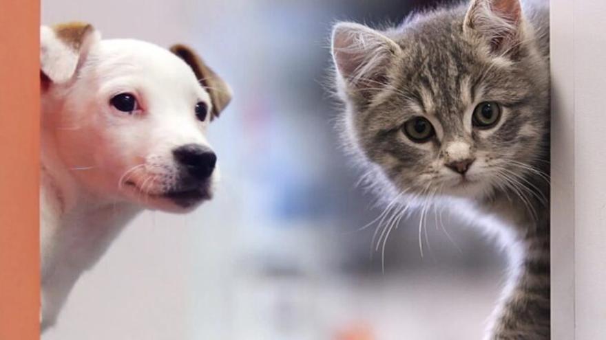 Les mascotes no es podran vendre en botigues, segons la nova Llei de Benestar Animal