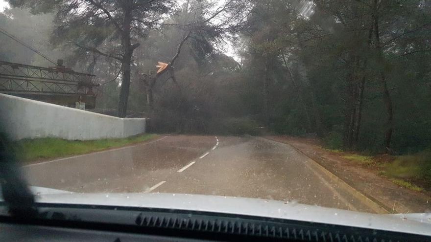 Temporal de lluvia y viento en Ibiza: los primeros daños