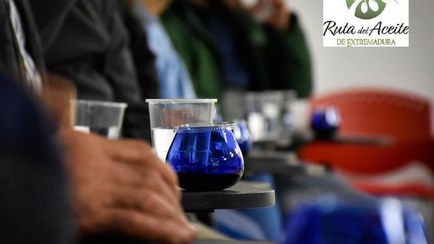 Cata degustación de aceite de oliva virgen extra, salud y placer