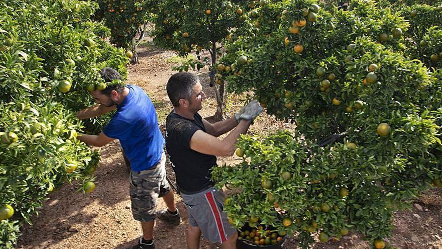 El sector citrícola frena la jornada de nueve horas y eleva los salarios un 1 %