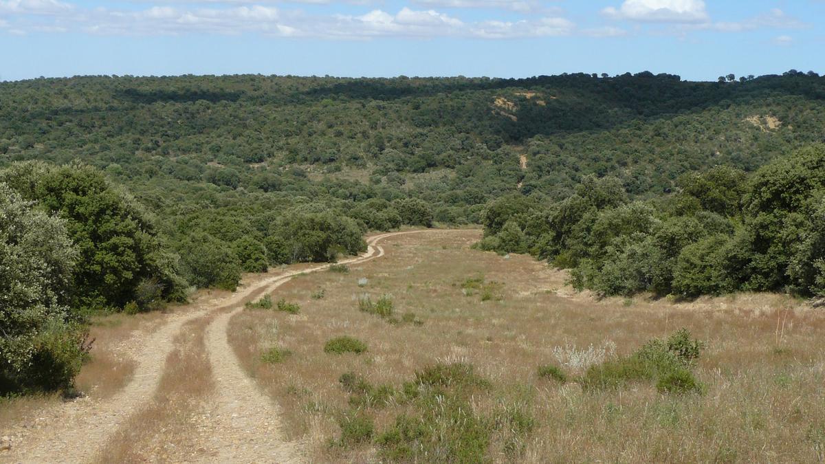 Encinar que se conserva en el bosque de Monte la Reina de Toro