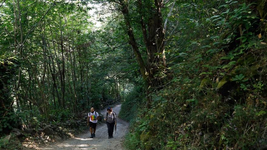 Rutas por Asturias: la senda de las Foces del Río Pino