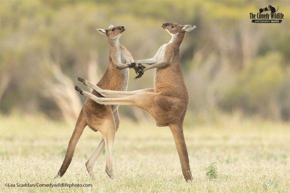 fotos-divertidas-animales-999.jpg