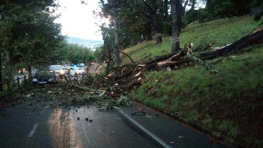 El temporal tira árboles en Vigo y causa varios destrozos