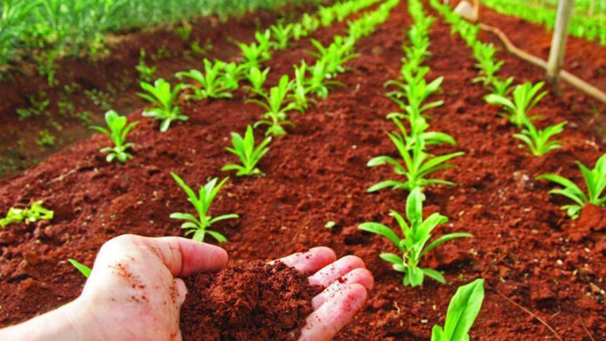 El suelo, tesoro de biodiversidad