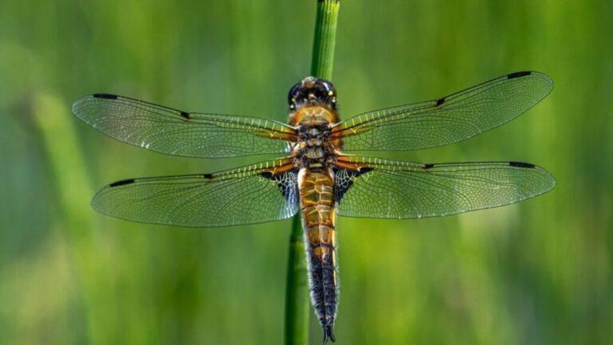 'Terra insecta': un libro esencial para entender los insectos