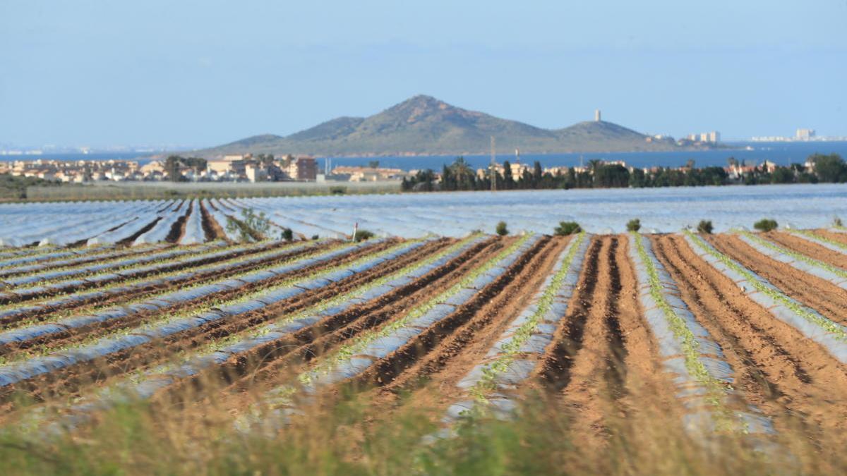 Cultivos cercanos al Mar Menor.