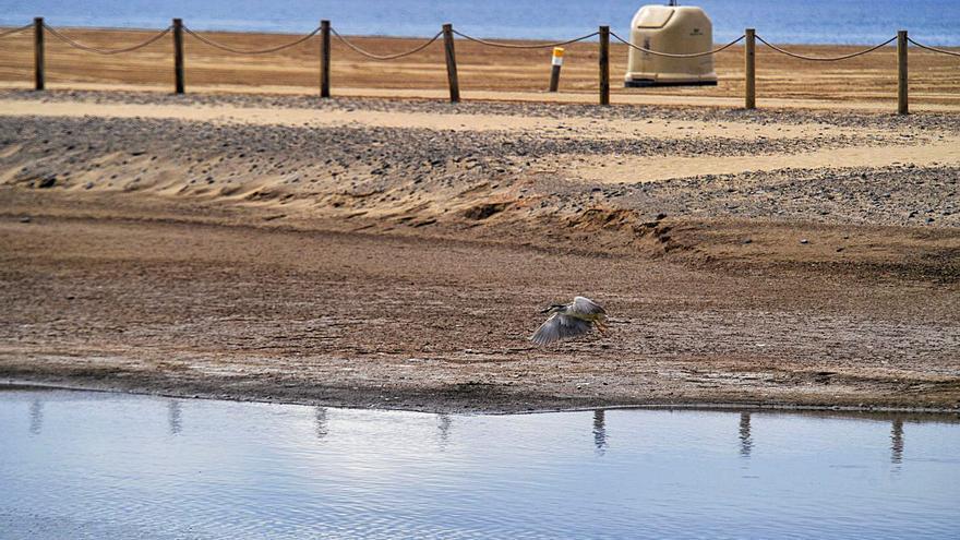 Un canal conecta las mareas del Pino con la Charca para renovar el agua