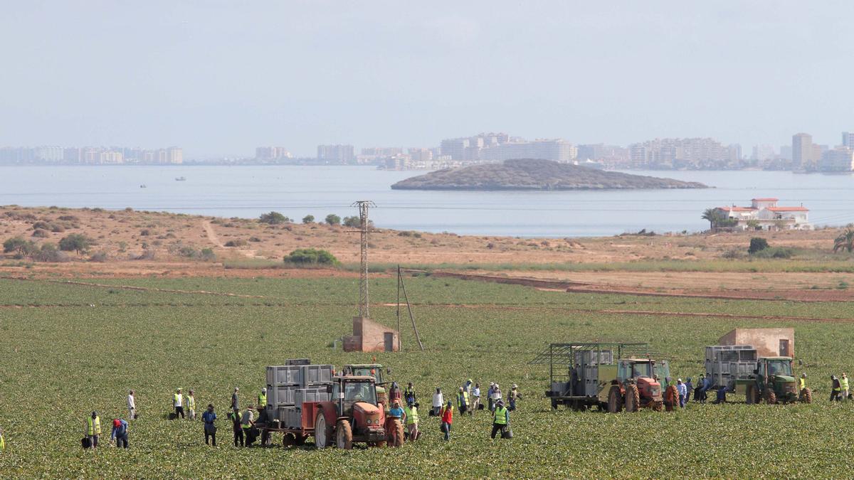 Agricultura en el Mar Menor