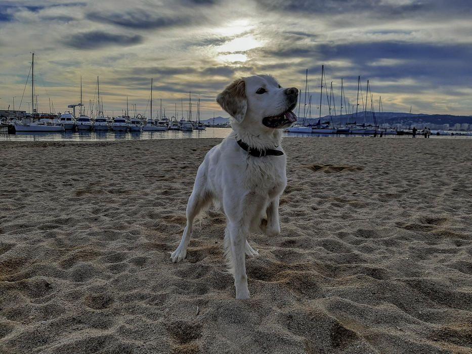 Posta de sol a Palamós, amb aquest bonic gos de protagonista.