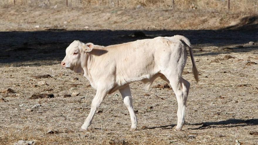 Preocupación por el impacto de las enfermedades en la ganadería