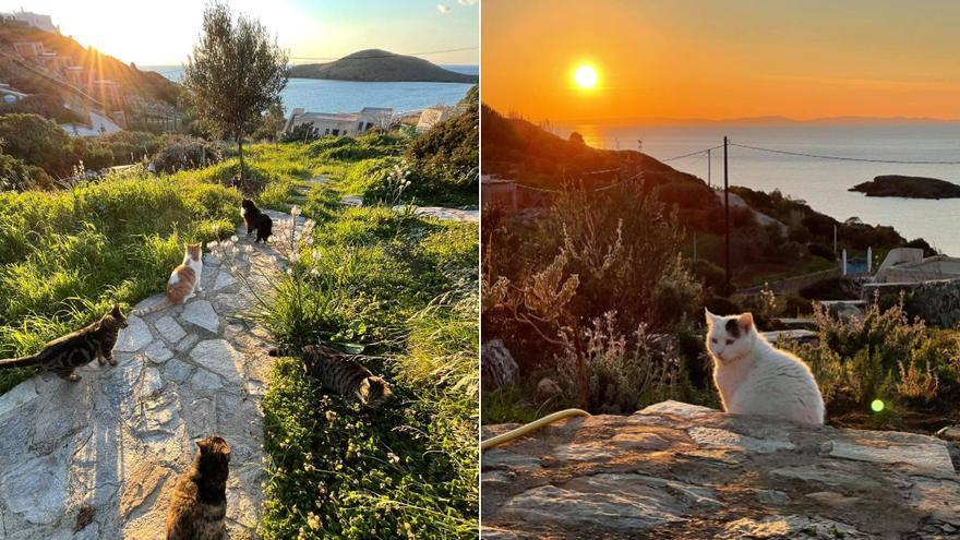 Una isla griega ofrece casa gratis y un sueldo de 530 euros por cuidar de gatos