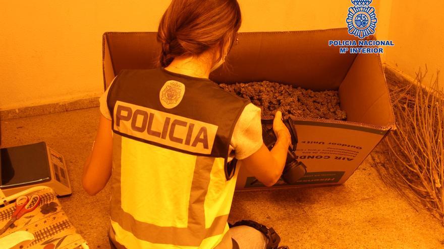 Desmantelan cuatro plantaciones 'indoor' en un edificio de Alcantarilla
