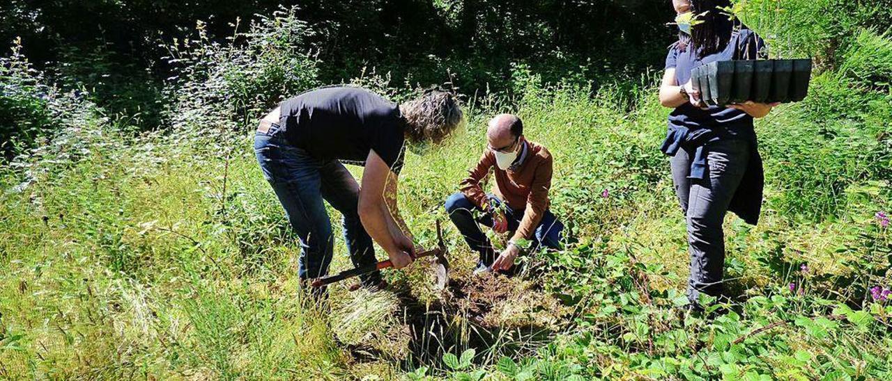Pablo García y José Víctor Rodríguez, plantando ayer un árbol a la entrada de Muniellos.