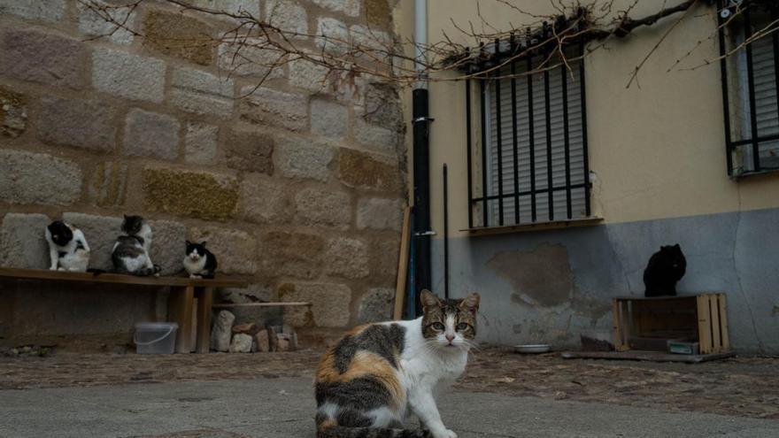 """Los gatos callejeros de Zamora, """"cuidados y saneados"""""""