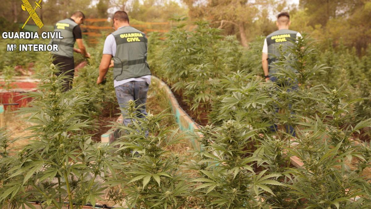 Imagen de la plantación de marihuana incautada