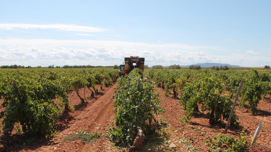 """Bruselas aprueba ayudas """"excepcionales"""" a los sectores del vino, frutas y hortalizas"""