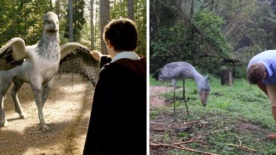 El hipogrifo de Harry Potter 'existe' en la vida real