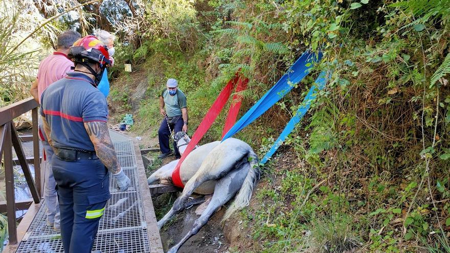 Rescatan a una yegua que había quedado atrapada en una acequia en Benahavís