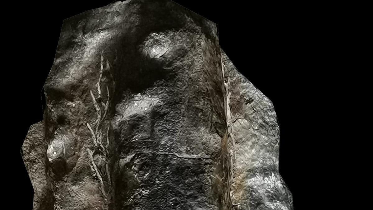 Imagen 5. Paratipo Luancaina elongata 1.jpg